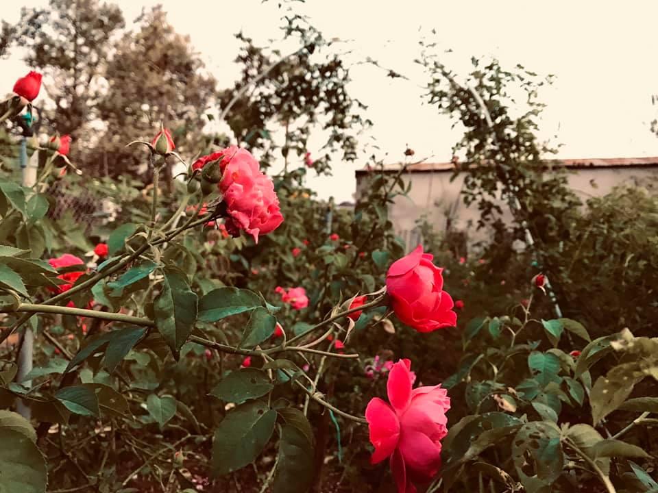 vườn hồng southern skincare